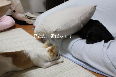 IMG_0941・2 コピー