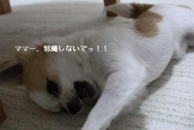 IMG_0958・2 コピー