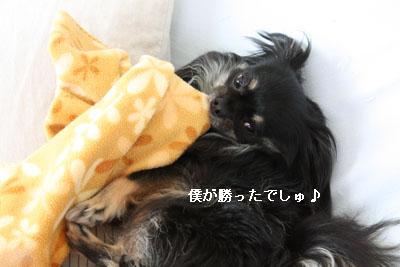 IMG_1049・2 コピー