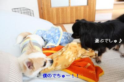 IMG_1000・2 コピー