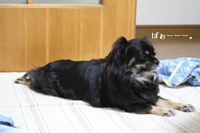 IMG_1361・2 コピー