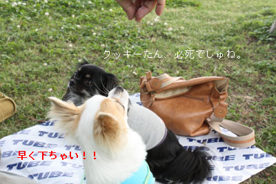 IMG_1438・2 コピー