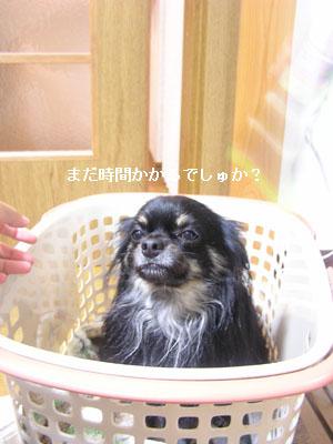 '09.6.13(5)・ コピー