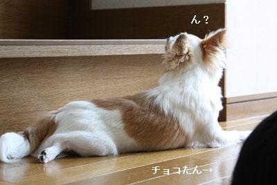 IMG_1620・2 コピー