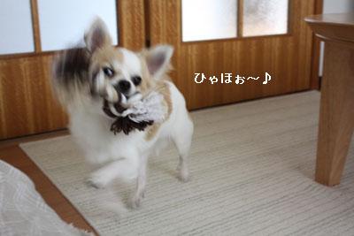 IMG_1637・2 コピー