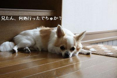 IMG_2048・2 コピー