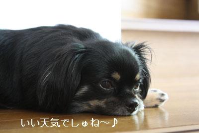 IMG_2117・2 コピー