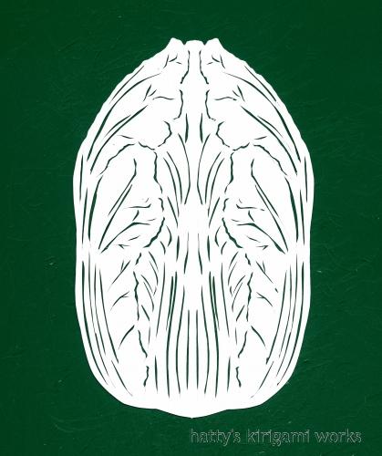 img157白菜s