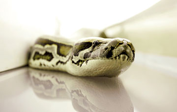 snakesonaplane4.jpg