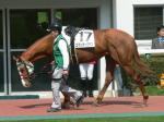小田切さんの新たなる珍名馬