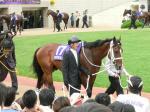 前哨戦を連勝中の菊花賞馬、アサクサキングス