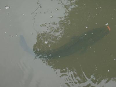 2009雷魚2