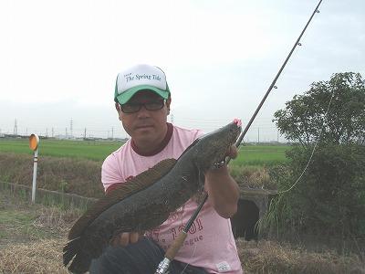 夏前雷魚2009