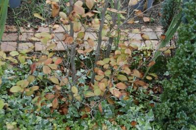 2008-10-26_16.jpg
