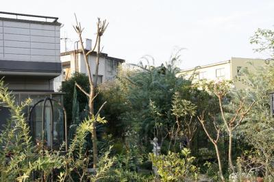 2008-11-15_01.jpg