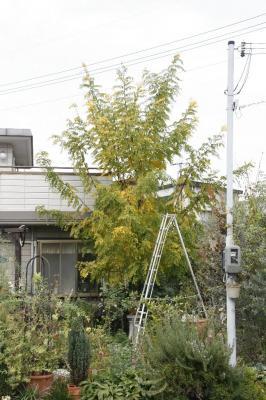 2008-11-15_14.jpg