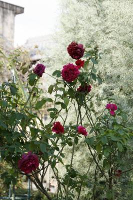 2008-11-15_35.jpg