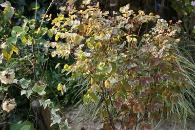 2008-11-15_44.jpg