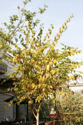 2008-11-15_52.jpg