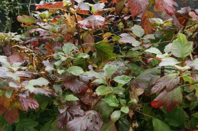 2008-11-16_08.jpg