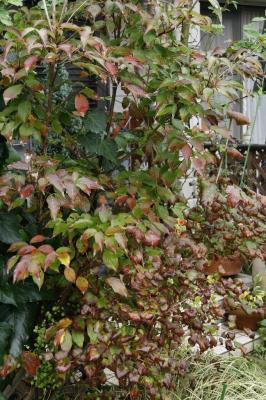 2008-11-16_10.jpg