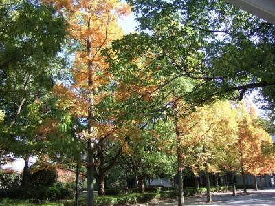 2008-11-19_01.jpg