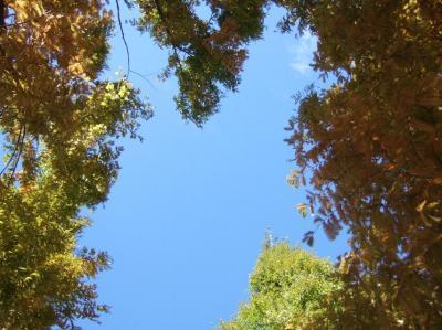 2008-11-19_02.jpg