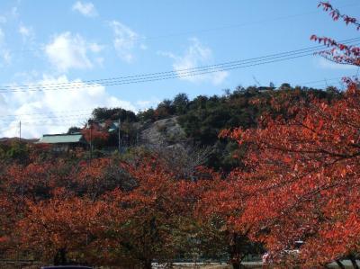 2008-11-20_03.jpg