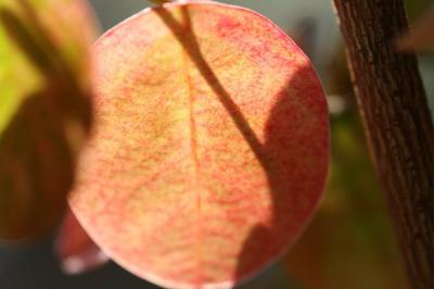 2008-11-25_00.jpg