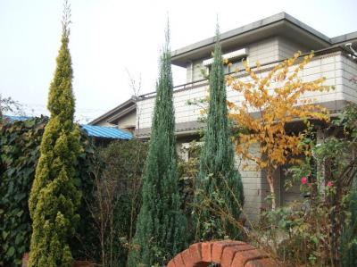 2008-11-29_07.jpg
