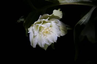 2009-01-04_30.jpg
