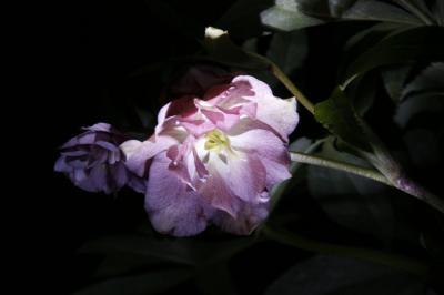 2009-01-04_31.jpg
