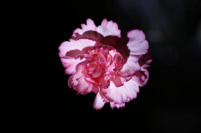 2009-01-14_06.jpg