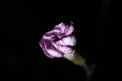 2009-01-14_09.jpg