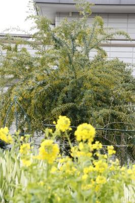 2009-03-12_06.jpg