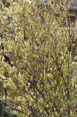 2009-03-28_62.jpg