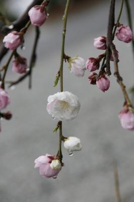 2009-04-04_23.jpg