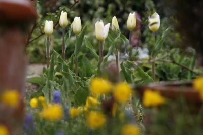 2009-04-04_38.jpg