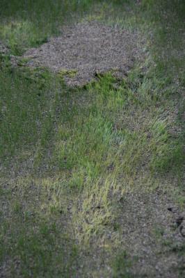 2009-04-10_14.jpg