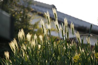 2009-04-11_53.jpg