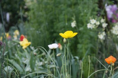 2009-04-15_33.jpg