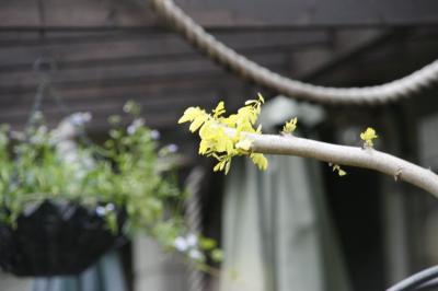 2009-04-16_32.jpg
