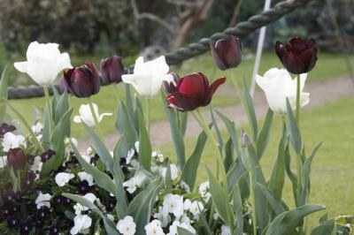 2009-04-18_73.jpg
