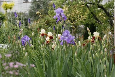 2009-05-04_02.jpg