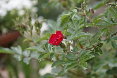 2009-05-10_25.jpg