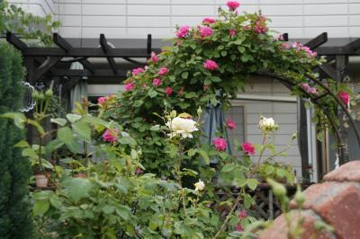 2009-05-11_38.jpg