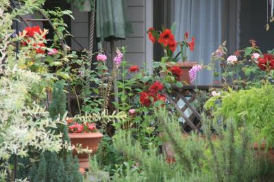 2009-06-14_53.jpg