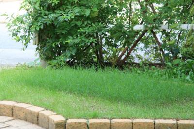 2009-08-03_00.jpg
