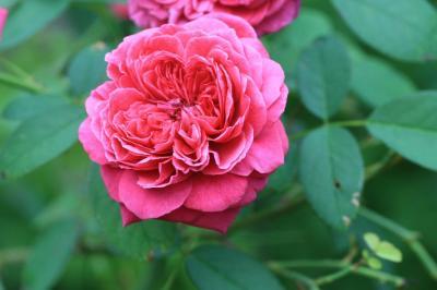 2009-08-05_01.jpg