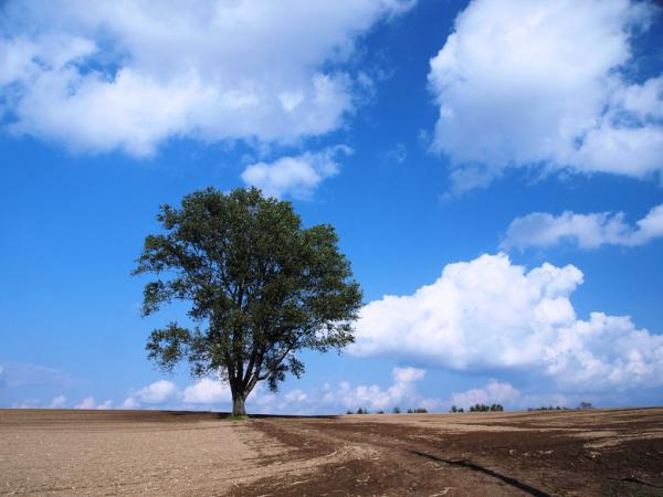 哲学の木2